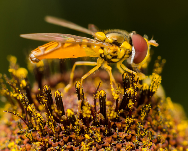Macro photography by Peter Bartlett